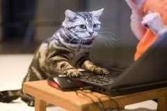 Очень интересная статья о раскрутке ваших web-сайтов в Интернете.